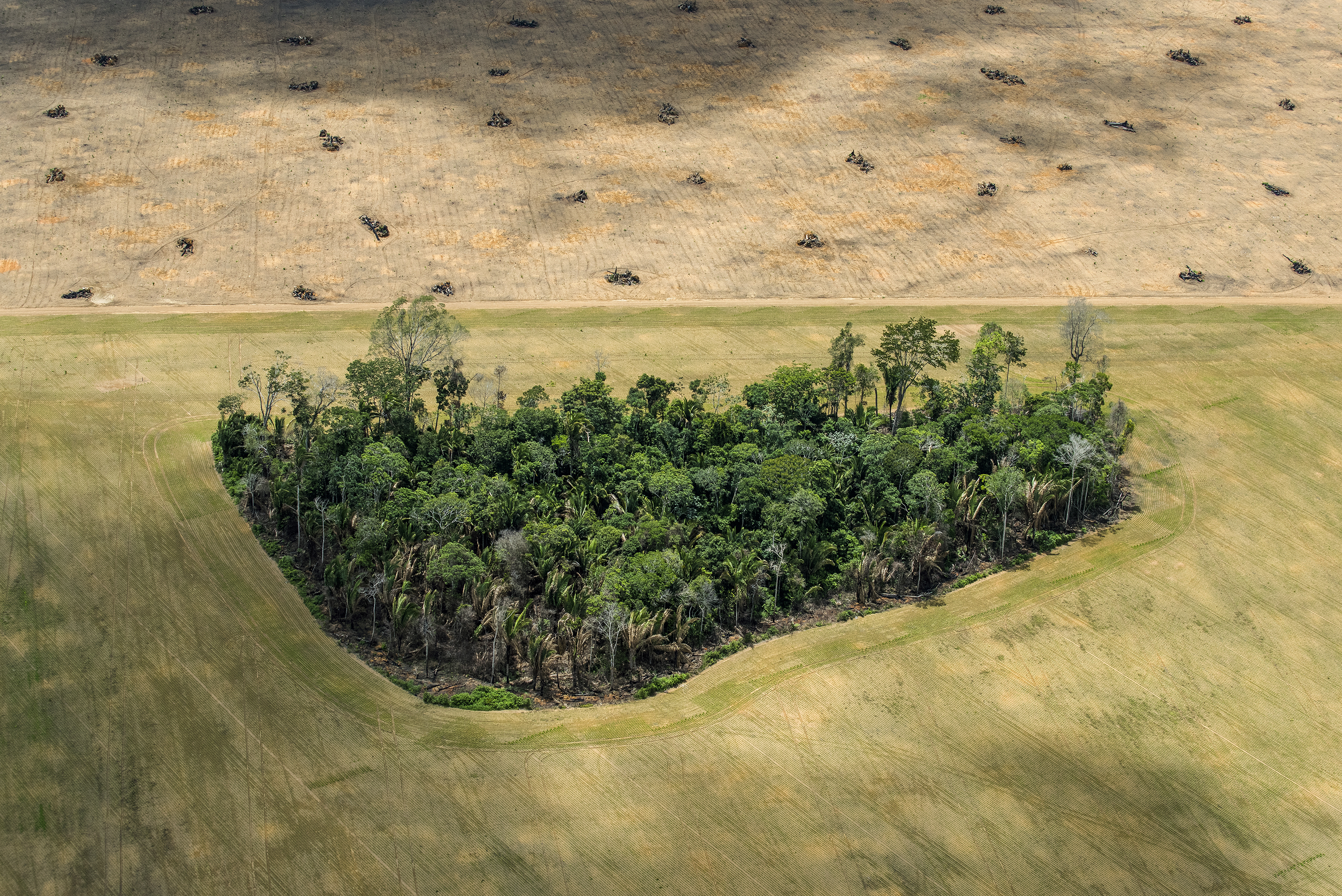 A remnant of rainforest stands in fields cleared for agriculture, near the Tapajós River, Brazilian Amazon.