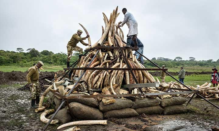 Building Ivory Tusk Mound, April 25, Nairobi, Kenya, 2016