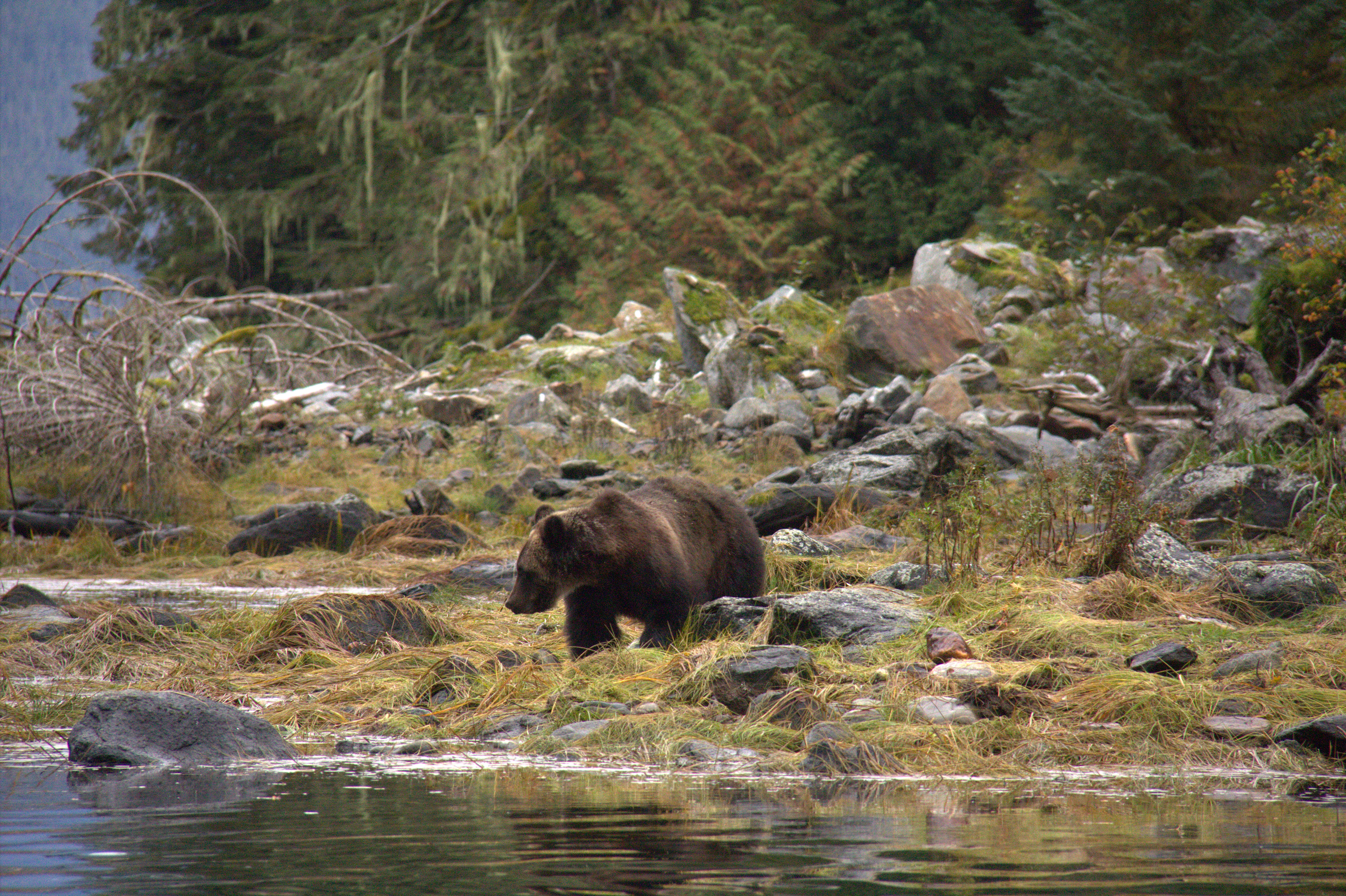 Most Of Great Bear Rainforest Now Protected From Logging