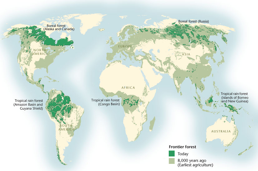 Last stands: Mapping the world's shrinking forests | Canadian