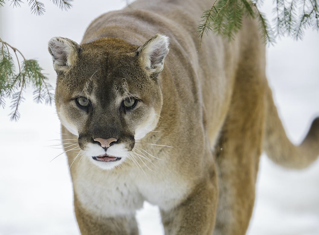 Wildlife quiz from Canadian Geographic