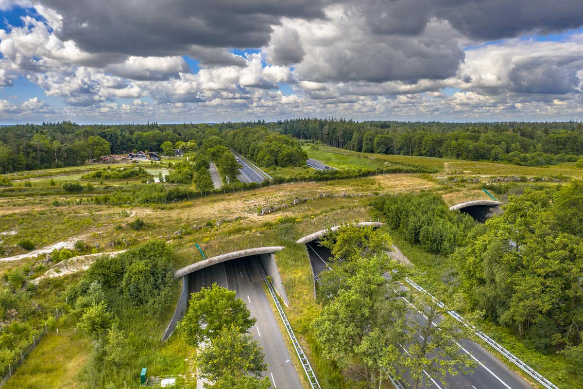 A highway overpass with grass on top instead of road