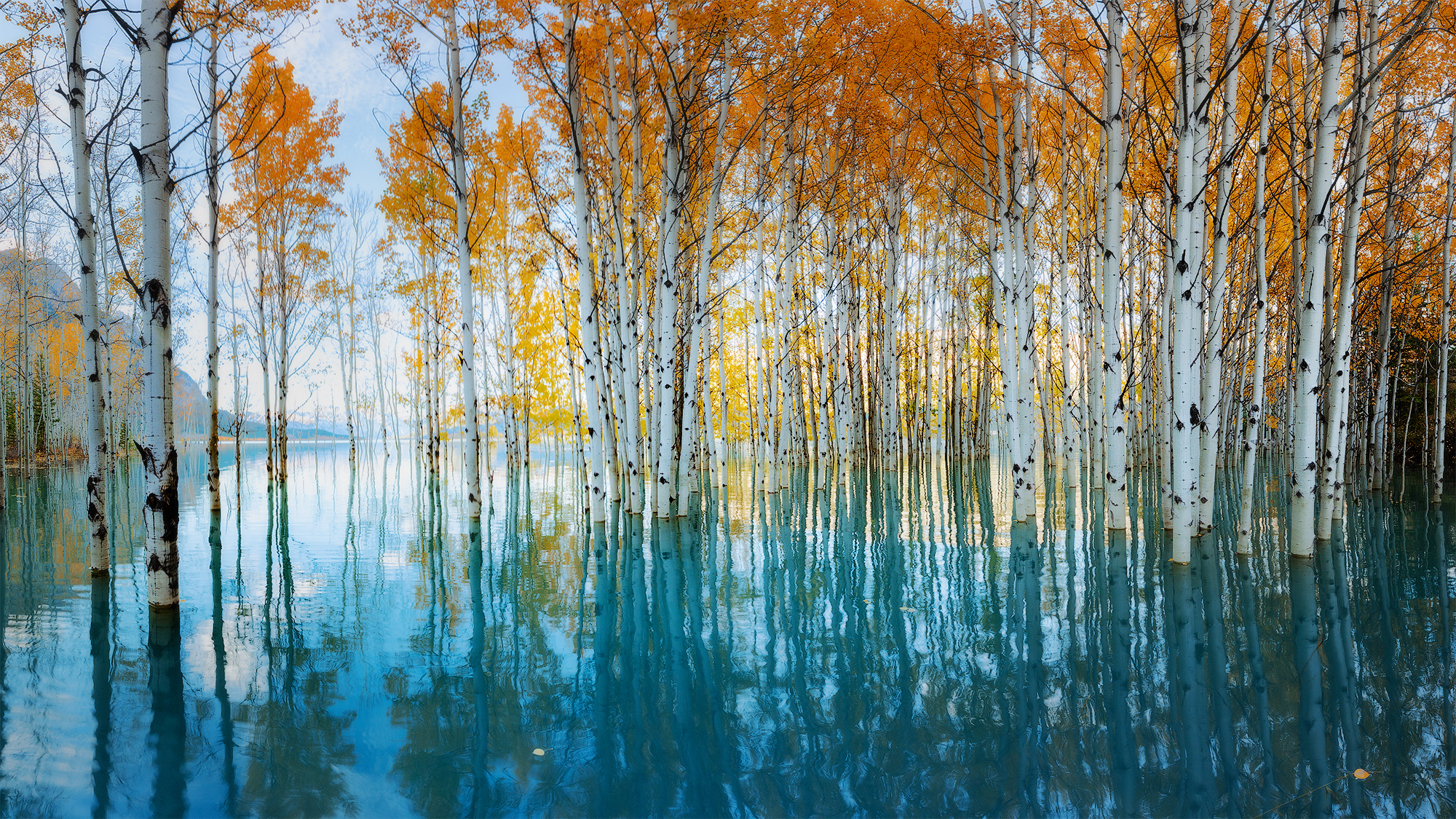 Fall trees reflect on a still blue lake