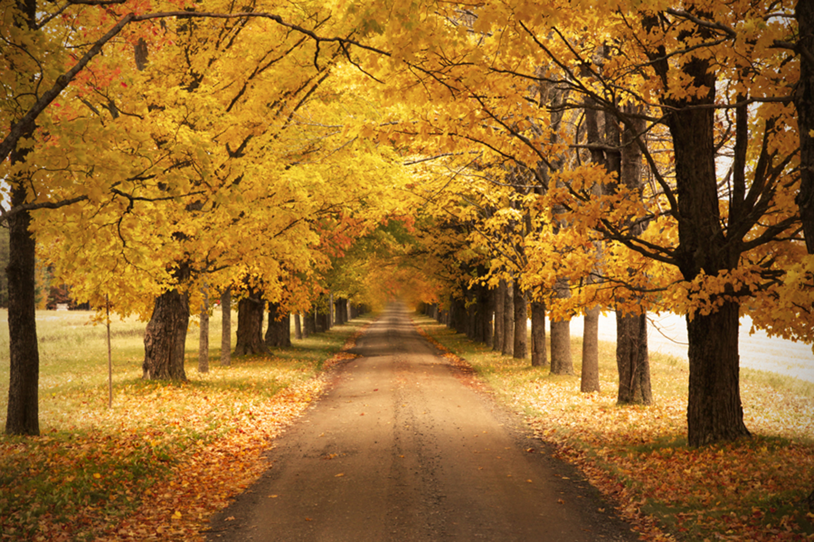 fall foliage driveway autumn road in Nova scotia by Heather Rushton
