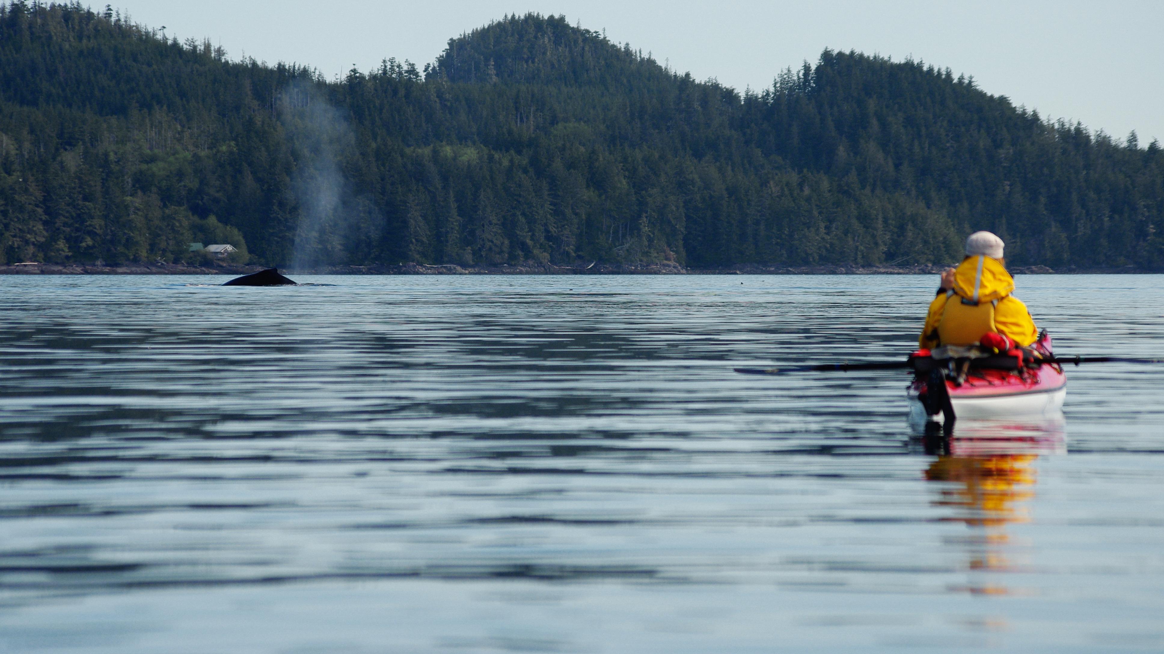 Kingfisher Resort Vancouver Island Owner