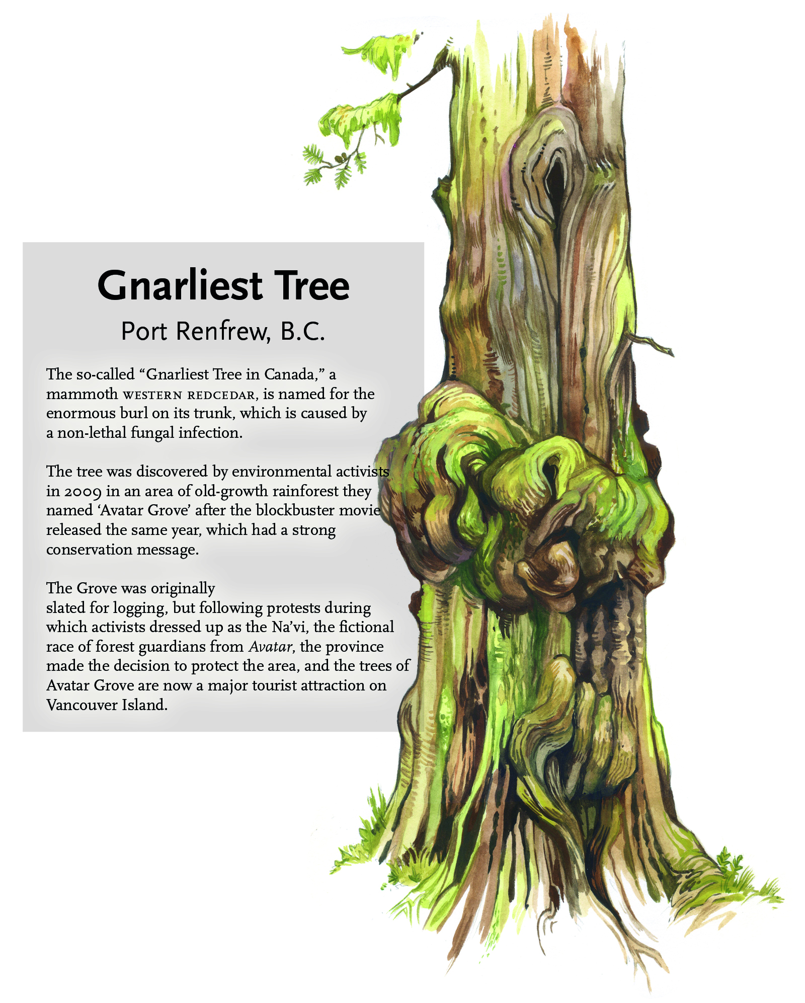 gnarliest tree illustration