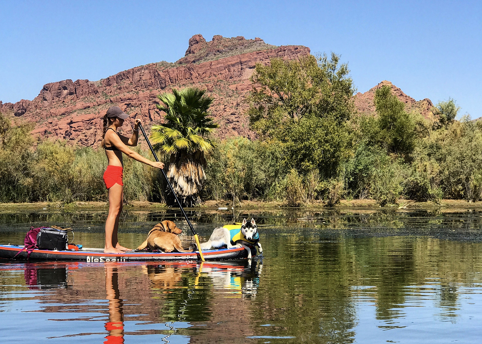 woman with dog stand-up paddle boarding on the salt river in mesa