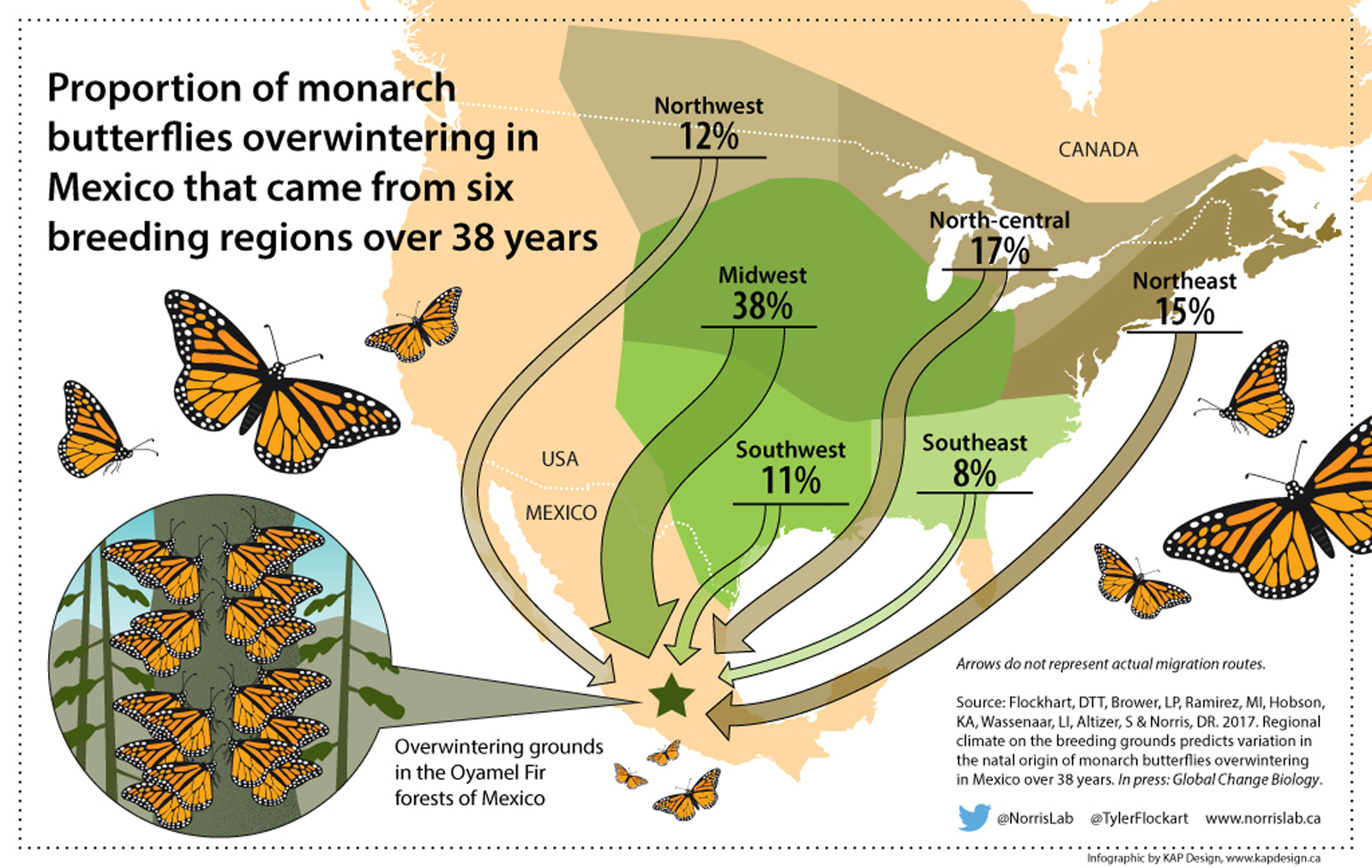 An infographic showing the breeding range of North American monarch butterflies
