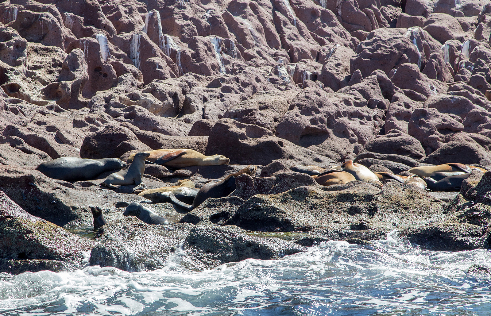 Sunbathing beauties - sea lions at Isla Espiritu Santo Mexico
