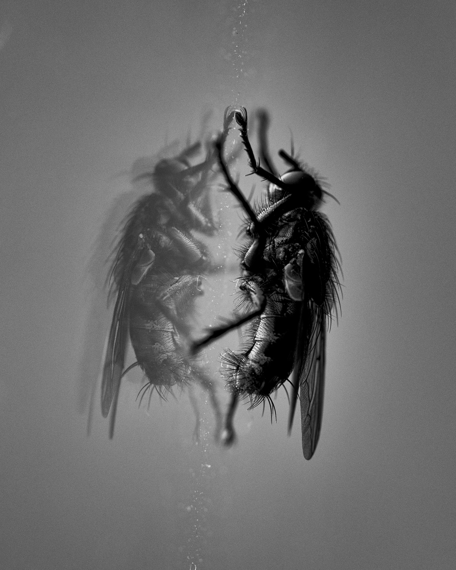 A house fly is reflection in a rain-streaked windowpane.