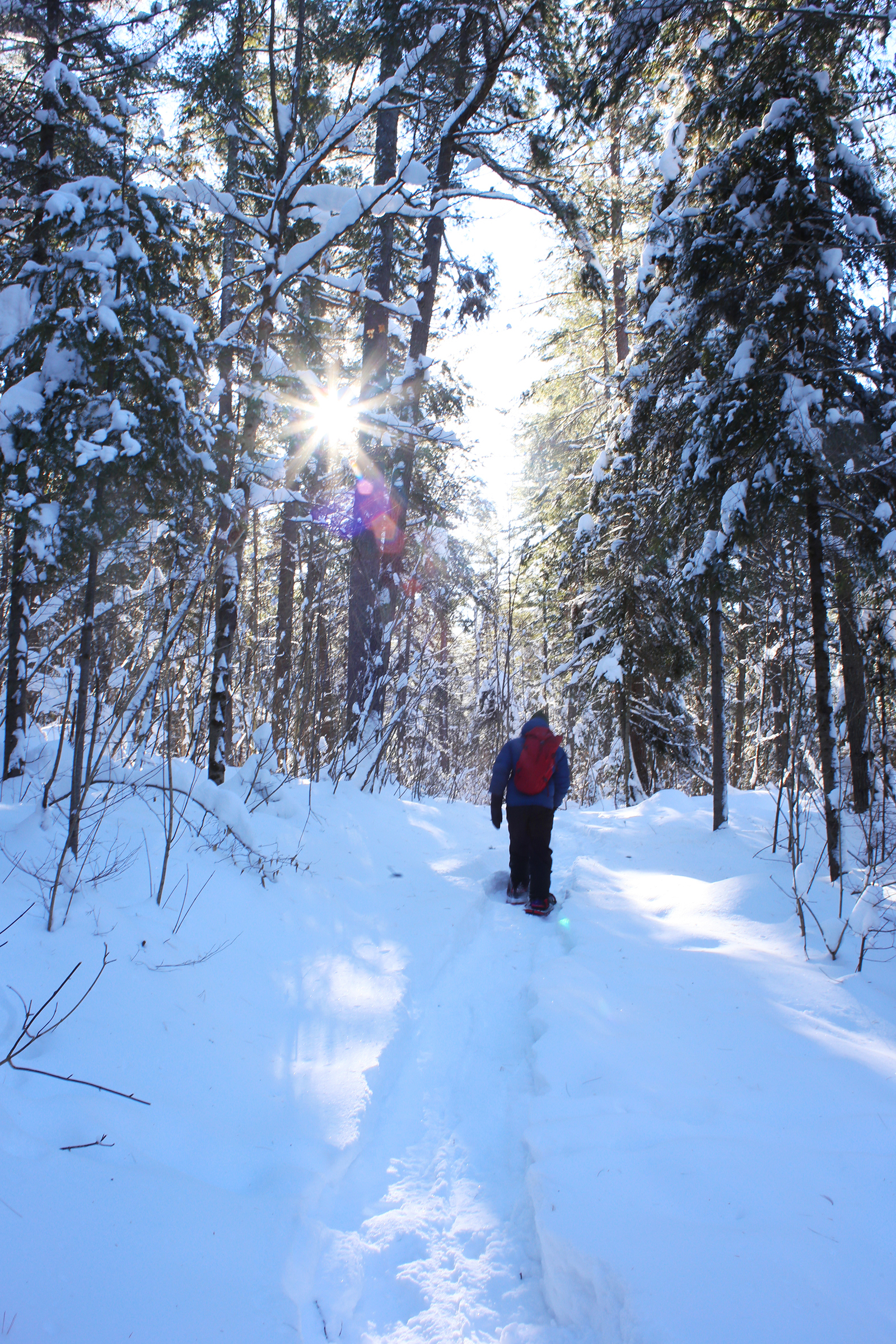 A man with a red backpack snowshoes up a snowy trail as the sun shines through the trees