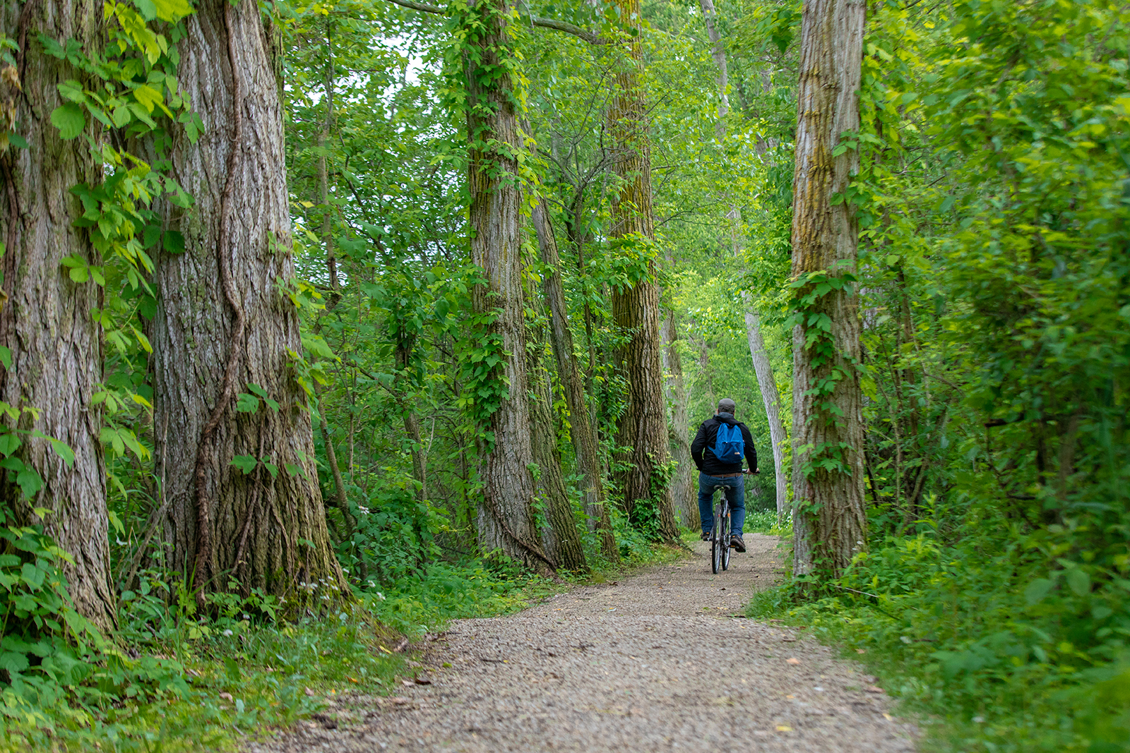 A man riding a bicycle down a trail through tall deciduous trees