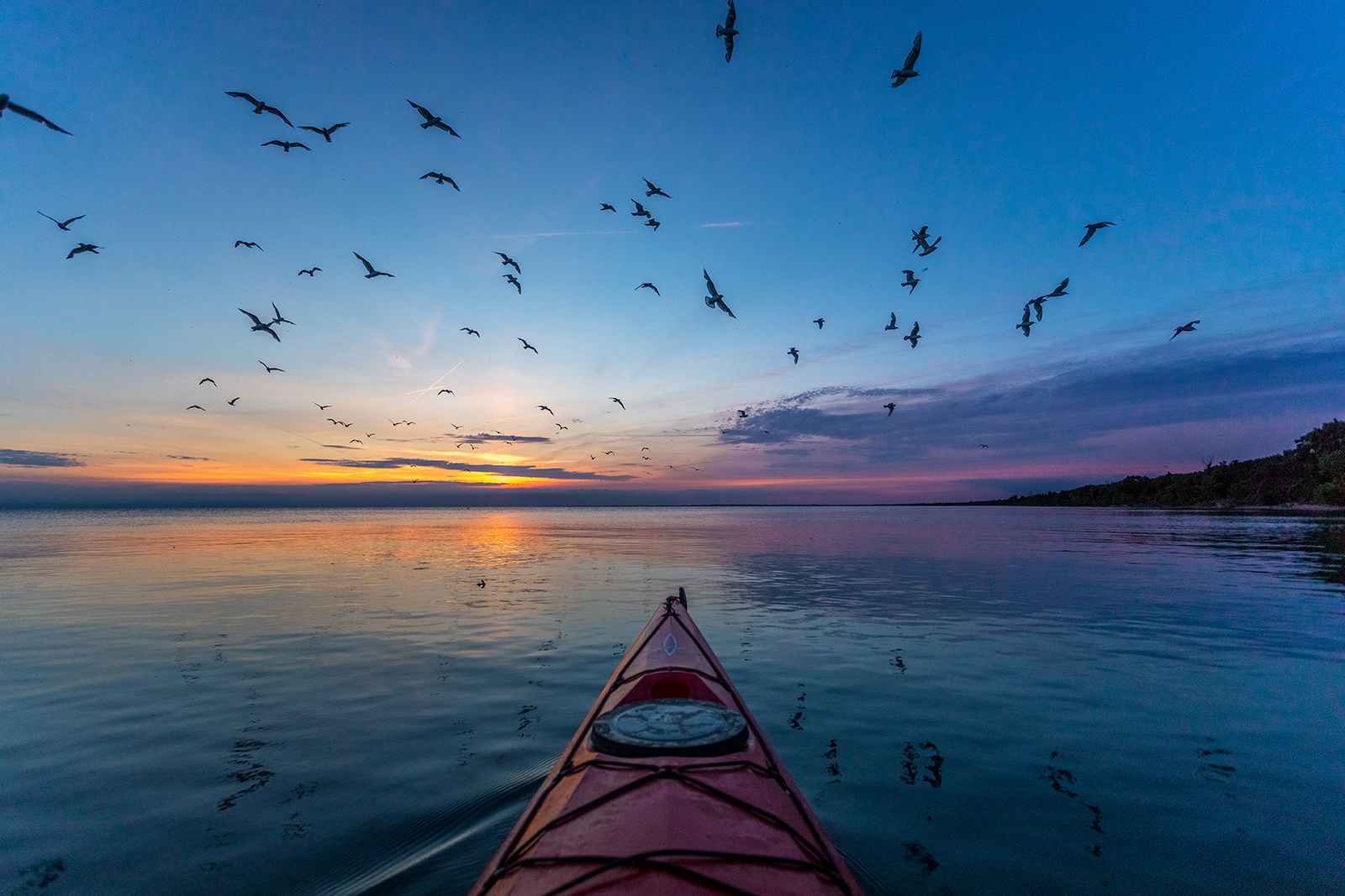 A kayak on water at sunset surrounded by birds