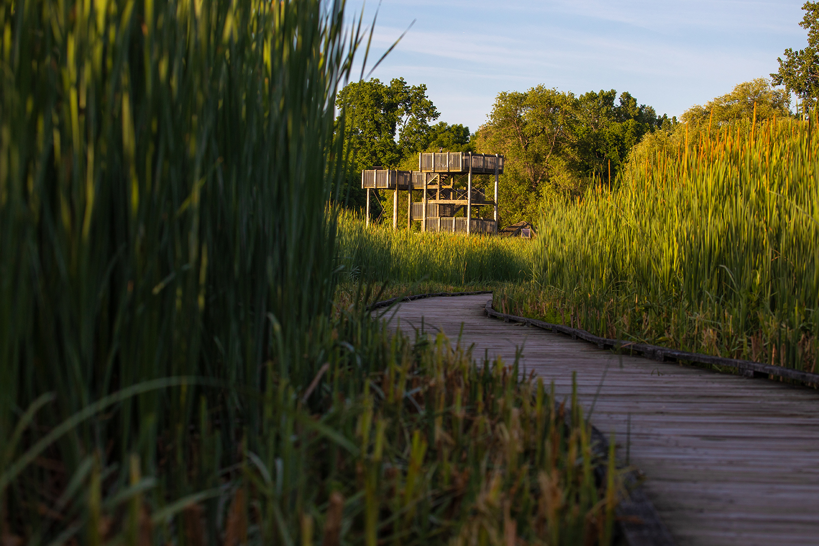 Marsh boardwalk at sunset in Point Pelee National Park