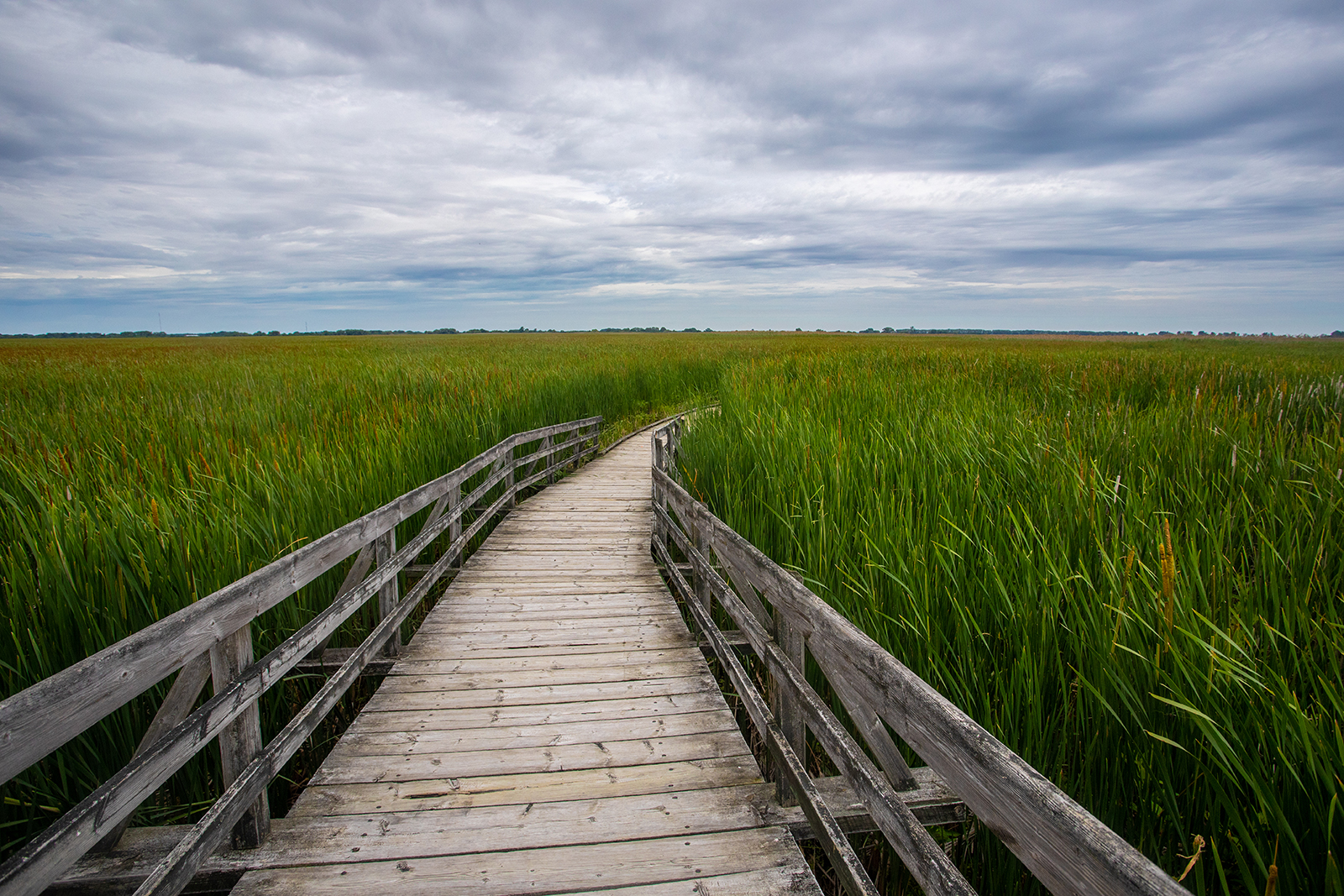 Wooden boardwalk through a marshland