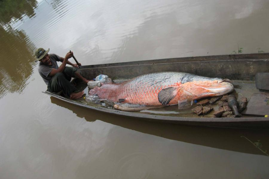 A Bolivian fisherman on a tributary of the Amazon River