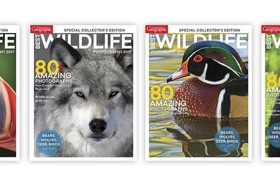 cover options for Best Wildlife Photography issue