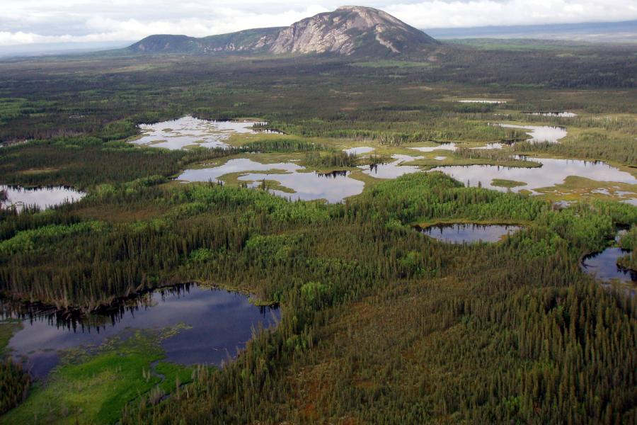 Boreal wetland in the Northwest Territories