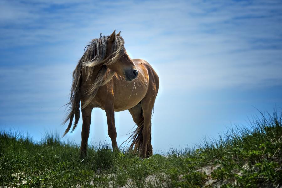 Sable feral horses
