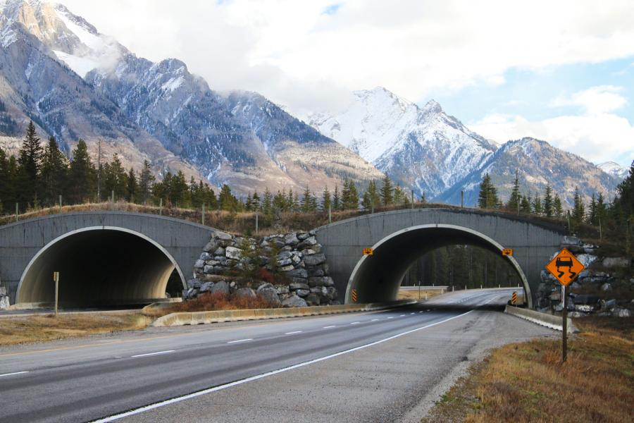 Banff wildlife overpass, anniversary, national park, bear, wolf, elk, cougar
