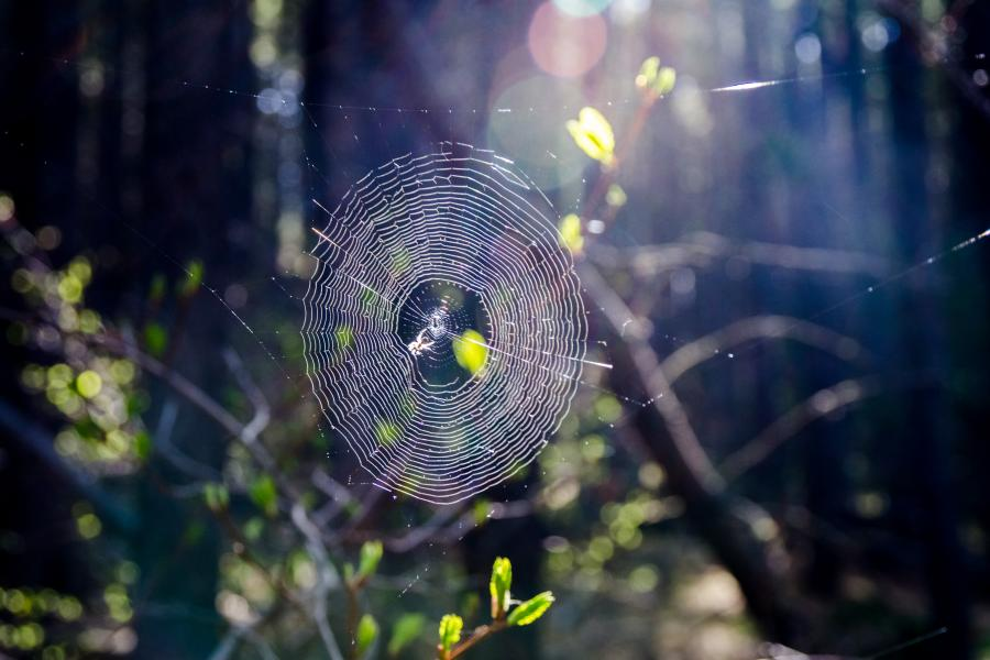 "Gotsǝ́ mı̨́ ""spider web"" in sunlight. Photo: Jean Polfus"