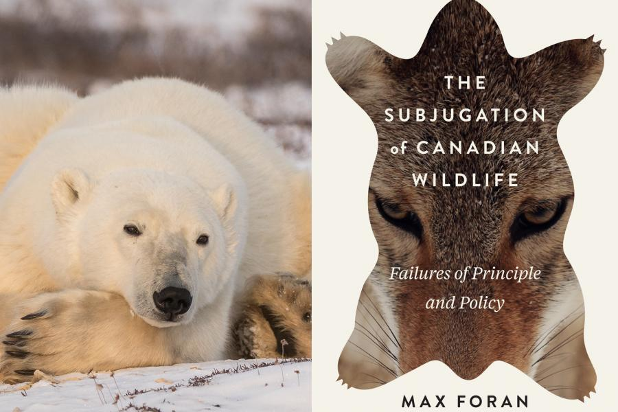 "Image of a polar bear, and the cover of ""The Subjugation of Canadian wildlife"""