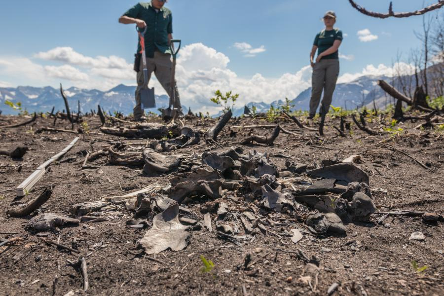Parks Canada archeologists stand behind burnt remains of bison skull and bones after the Kenow wildfire, Waterton Lakes National Park. (Parks Canada)