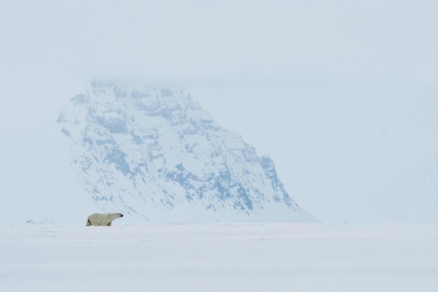 Floe edge polar bear, Nunavut