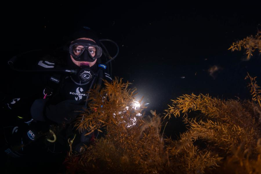 A female scuba diver holds a light up to anemones during a night dive