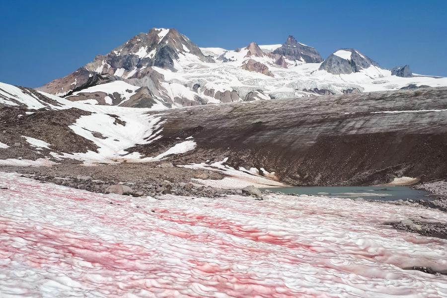 Watermelon snow on Mount Garibaldi