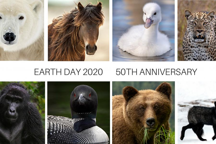 a collage of wildlife photos including a polar bear, horse, gosling, cheetah, gorilla, loon, grizzly bear and fox