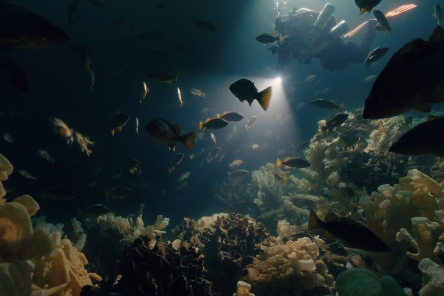 Fish swim in the light of a scuba diver