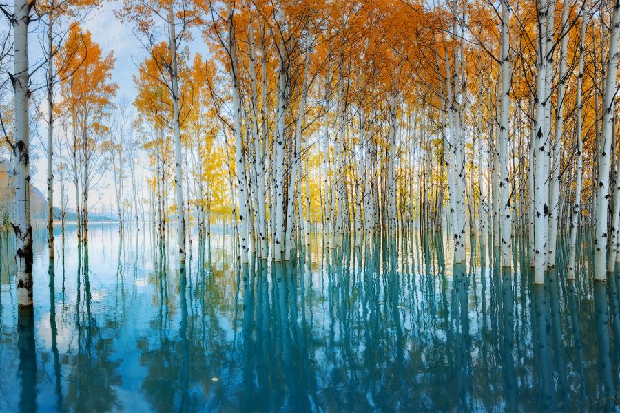 Fall trees reflect on a blue lake
