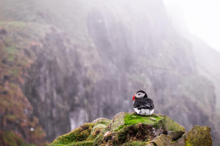 Puffin sitting on cliffside surrounded by mountains.