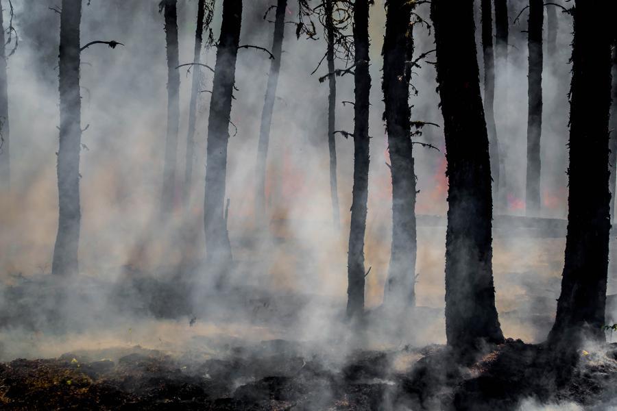 Smokey forest fire