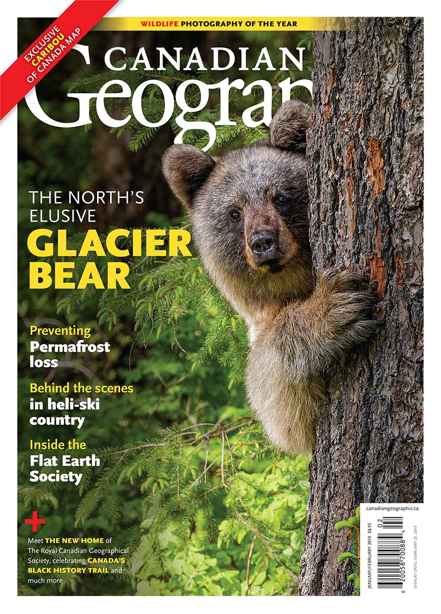 The North's Elusive Glacier Bear | January/February 2019