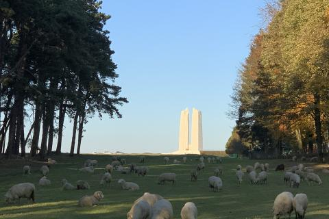 Canadian National Vimy Memorial monument with sheep grazing