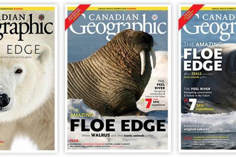 How we chose the cover, polar bear, walrus, seal, floe edge, arctic, north