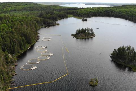 Limnocorrals intalled in ELA Lake 260 for the BOREAL study.