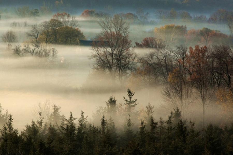 A foggy fall day in Prince Edward County (Darlene Shantz/CG Photo Club)