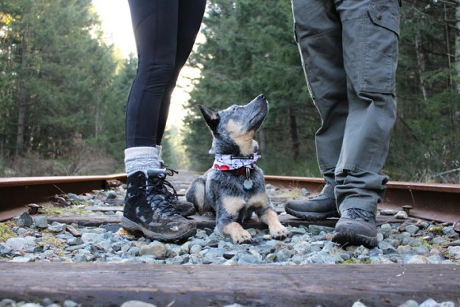 Pets and people category winner in the 2015 Your Pets in Focus Photo Competition