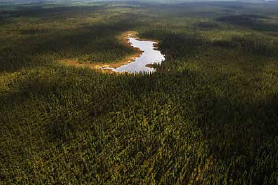 The historic Canadian Boreal Forest Agreement signed on May 21, 2010, brought together environmental activists and the forestry industry for the first time. (Photo: Tobin Grimshaw)