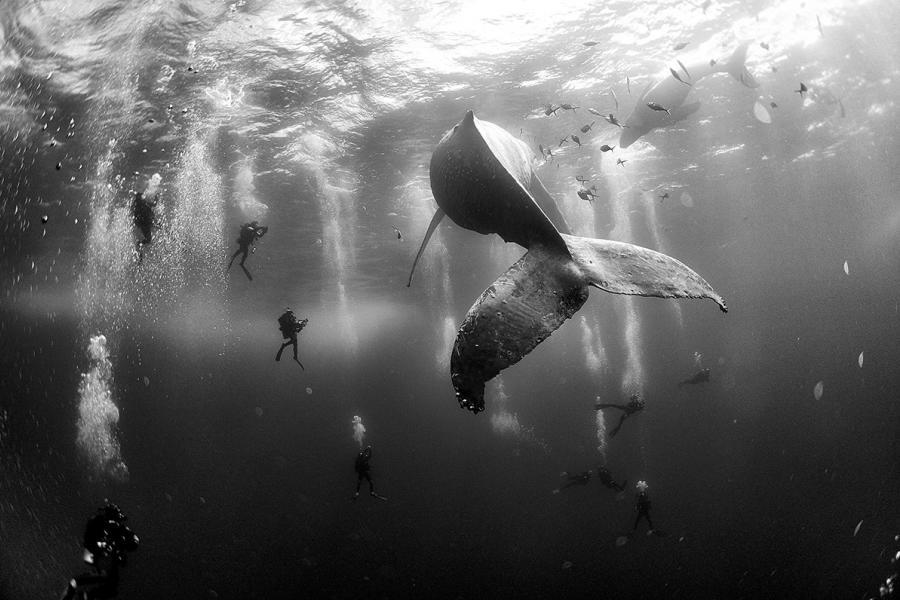 A humpback whale and her newborn calf swim near Roca Partida
