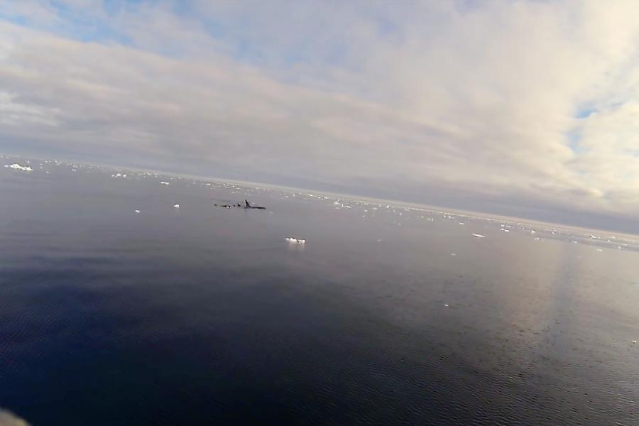 A pod of Atlantic orcas is seen a few meters away from a fishing boat in the North Atlantic