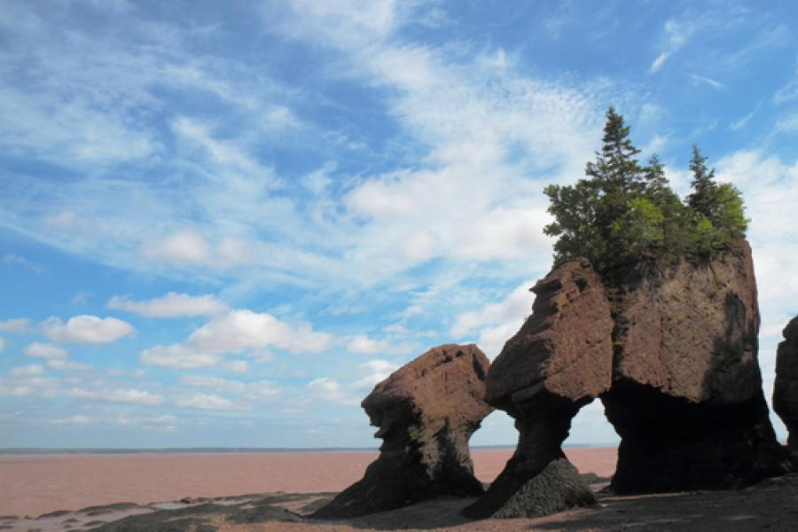 A huge flowerpot made from rocks and trees at Hopewell Rocks Provincial park during low tide. (Photo: Jean-Charles Thouin/CG Photo Club)
