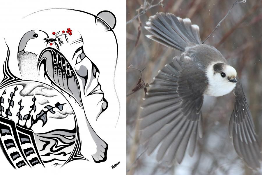 Anishinaabe artist Mark Nadjiwan's work, For Seven Generations, featuring the gray jay