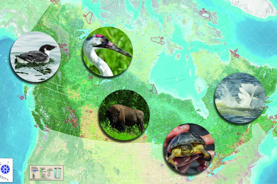 How national parks are helping to conserve species