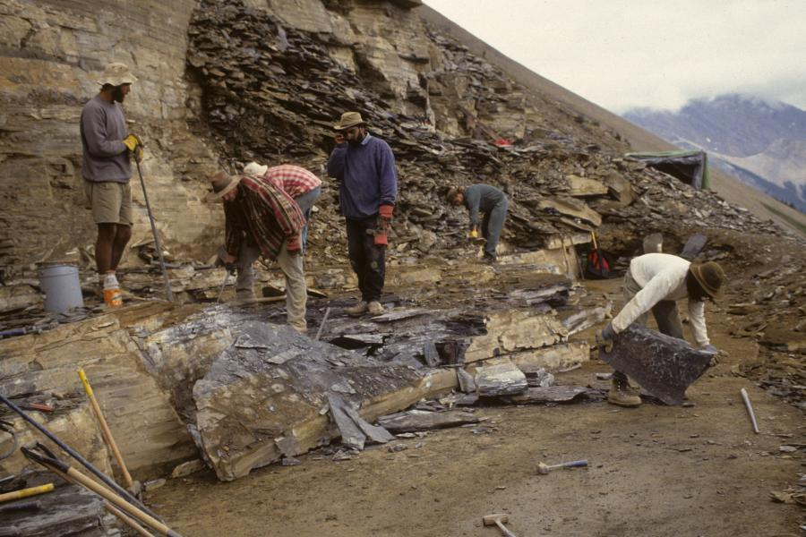 A team excavates fossils at the Walcott Quarry