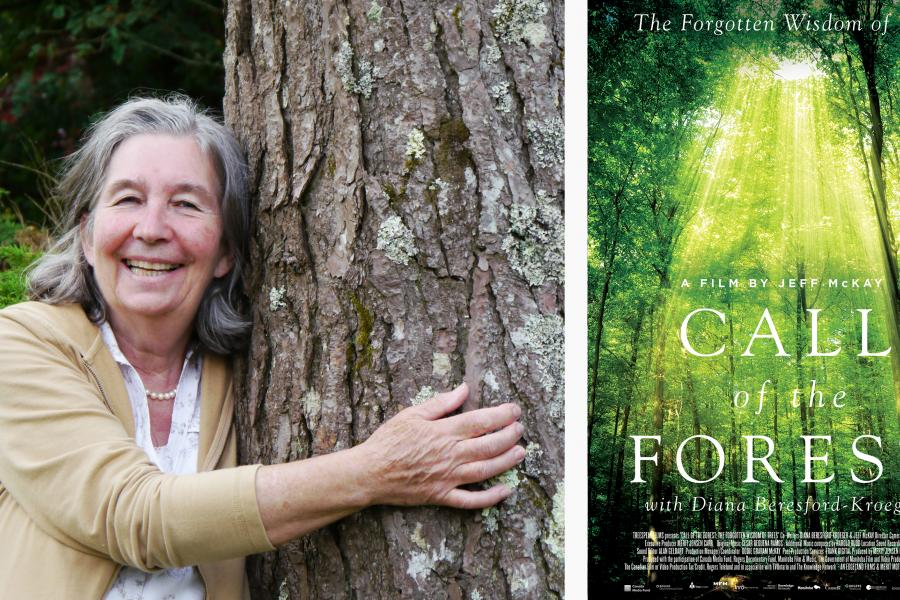 Diana Beresford-Kroeger in her new tree documentary Call of the Forest