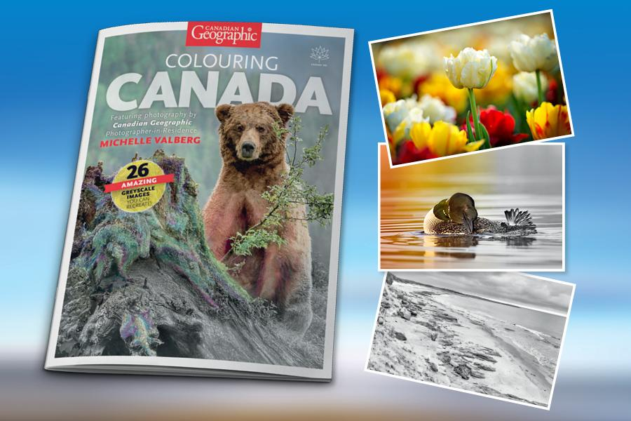 colouring book, photography, wildlife